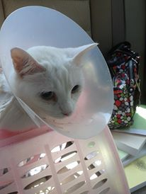 The cone won't be staying around, though.